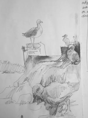 davis-head-gulls